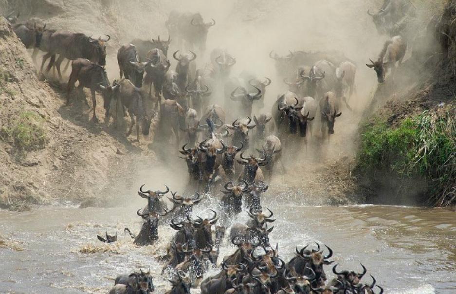 Going wild for Tanzania's wildlife